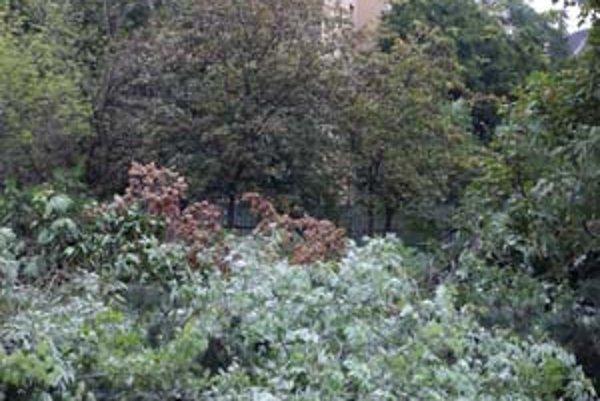 Park za rozhlasom majú zastavať. Mesto rokuje s investorom o zachovaní časti zelene. Investor nelegálne vyrúbal už 12 stromov.
