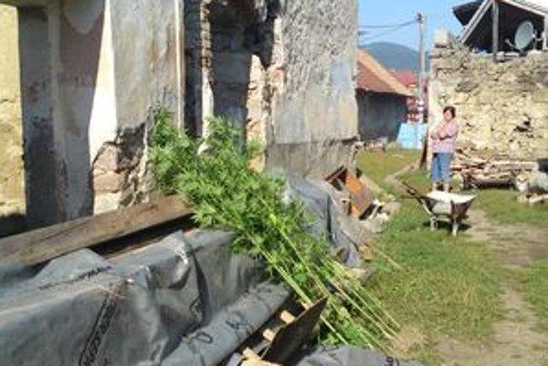 Policajti zabavili približne tridsať rastlín.