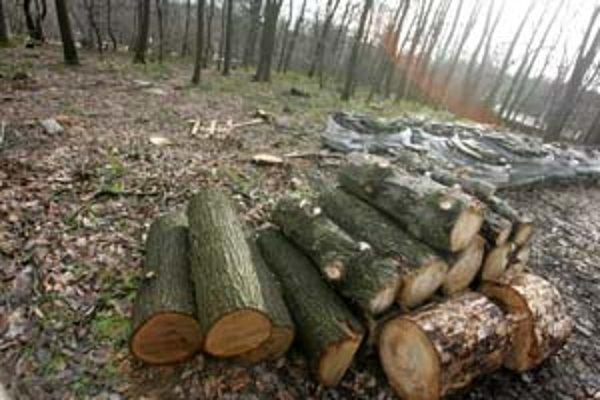 S výrubom stromov na Kolibe vidia ochranári paralelu so zaberaním lesa na neďalekej Železnej studienke, kde má vyrásť hotel a ďalšie nové stavby.