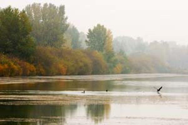 Vodohospodárska výstavba prenajala lužný les akciovej spoločnosti Xiland na 99 rokov.