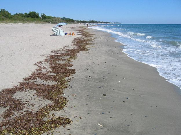 Východné pobrežie Korziky je menej členité a úsekom sa tiahne úzky piesočný pás.