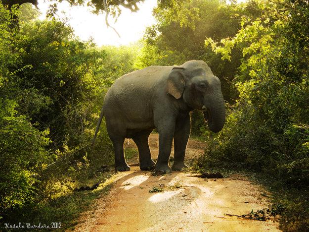 Srí Lanka má obrovskú biodiverzitu, možno tu pozorovať 91 druhov cicavcov a 233 druhov vtákov.
