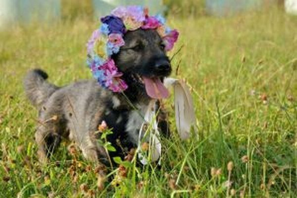 Jedným zo psíkov, ktorý čaká na trvalý domov, je Barko.