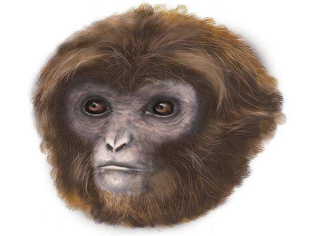 Umelecké zobrazenie hlavy Pliobates catalonia.