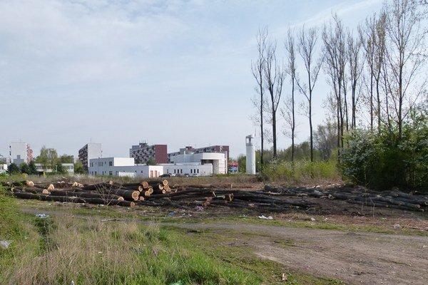 V okolí nového kostola na sídlisku Rybníky 5 vypílili stromy.