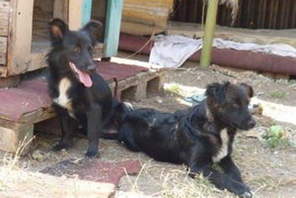 Občianske združenie Šťastný domov pomáha nájsť nový domov opusteným zvieratám z ulice.