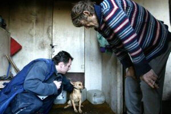 Projekt sterilizácie túlavých psov spustila Sloboda zvierat