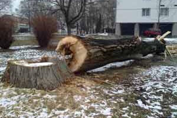 Stromy boli podľa mestského úradu už staré.