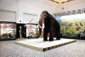 Lákadlom výstavy Stratený svet mamutov bol obrovský mamut . Prírodovedné múzeum vlani navštívilo 83tisíc ľudí.