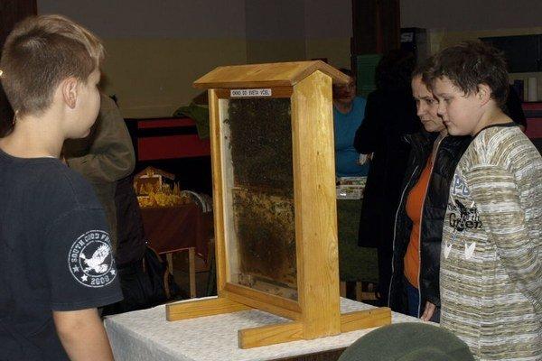 Pohľad na včely naživo.