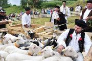 Vďaka ovciam máme tradičné slovenské jedlo – bryndzové halušky.