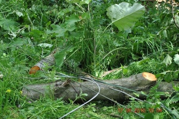 Silný vietol polámal stromy aj v Ochodnici.