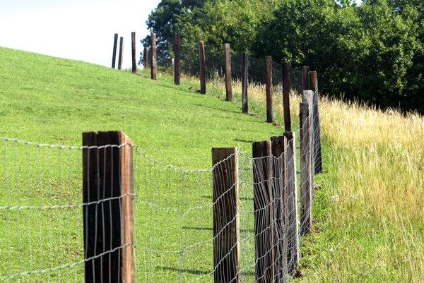 Firma chce okolo lesa postaviť sedem a pol kilometrov dlhý plot.