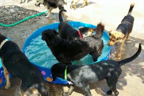 Bazéniky, ktoré im darovala sponzorka, si psíky užívajú.