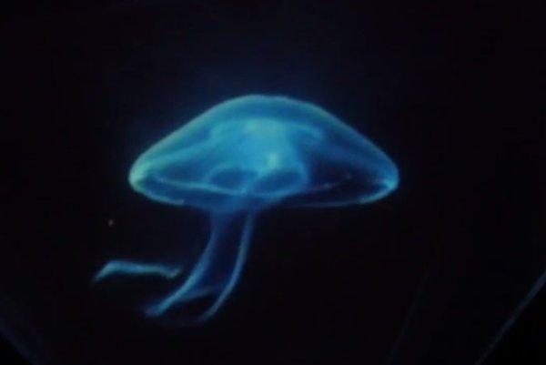 Hologram medúzy.