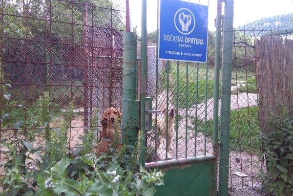 Asi štyristo psíkov zachránilo dobrovoľnícke zoskupenie Dočasná opatera.