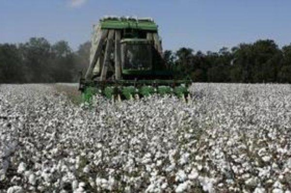 Zber bavlny v USA.
