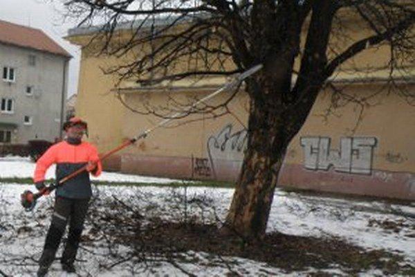 O stromy sa starajú Technické služby mesta Prievidza.