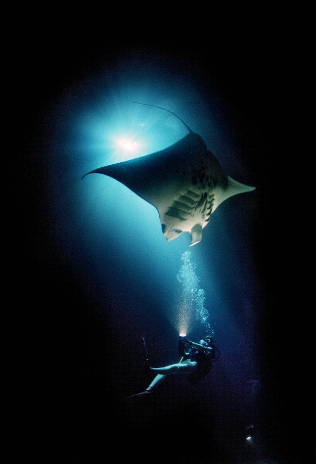 Život pod morskou hladinou stále poriadne nepoznáme.