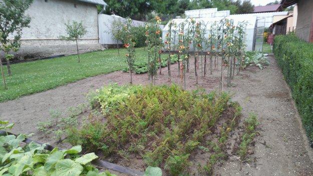 Ľudia majú obavy jesť ovocie či zeleninu zo svojich záhradiek.