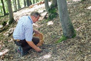 Chutné huby – lieviky v 99,9 percentách nechávajú hubári v lese.