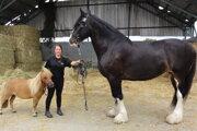 Mini kôň a mega kôň. Takto ich mohli vidieť návštevníci poľnohospodárskej výstavy.