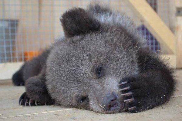 Medveď Kubo relaxuje.
