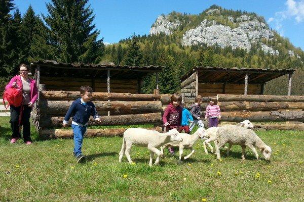 Okrem tradičných liptovských zvierat budú na farme napríklad aj pávy a čínske prasatá.