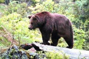 Žiadosť hrádockých lesníkov bude teraz posudzovať ministerstvo životného prostredia.