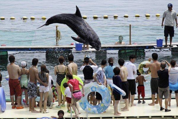 Najlepšie vyzerajúce kusy z lovu v zátoke Tajdži sú predané akváriám.
