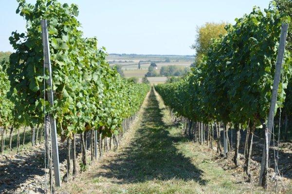 Posedenie v pivničke je vyvrcholením vinárovej celoročnej driny.