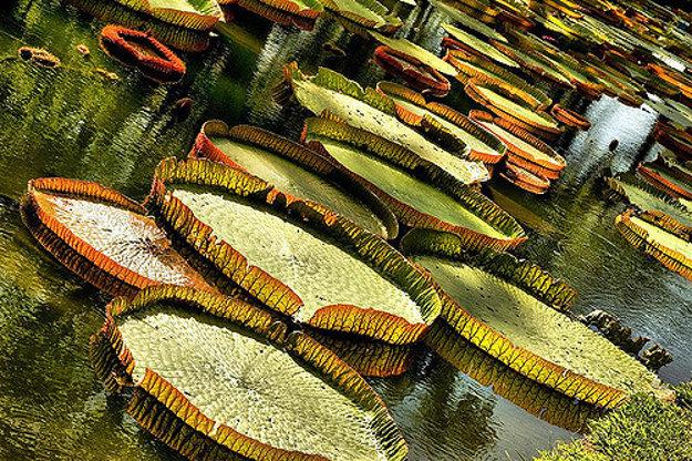 Botanická záhrada Pamplemousses.