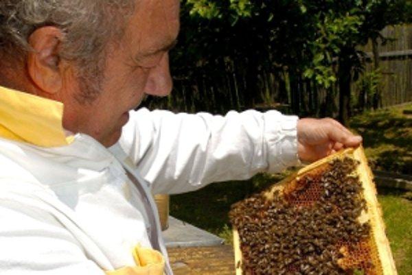 Roj včiel môže byť nebezpečný, odchytávať by ho mali odborníci.