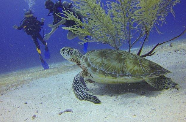 Marsa Alam ponúka perfektný podvodný svet pre potápačov.