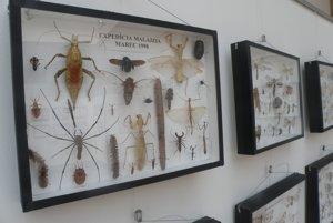 Hmyz pochádza zo zbierky Michala Zachara.