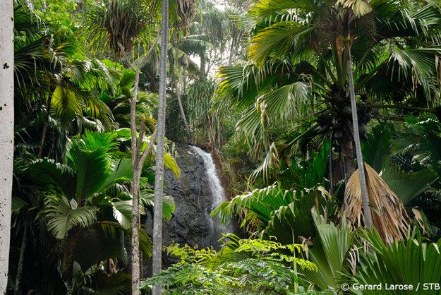 Vallée de Mai je unikátny prales.