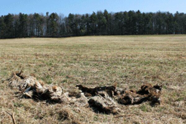 Časti tiel mŕtvych zvierat našli ľudia neďaleko Malinovej.