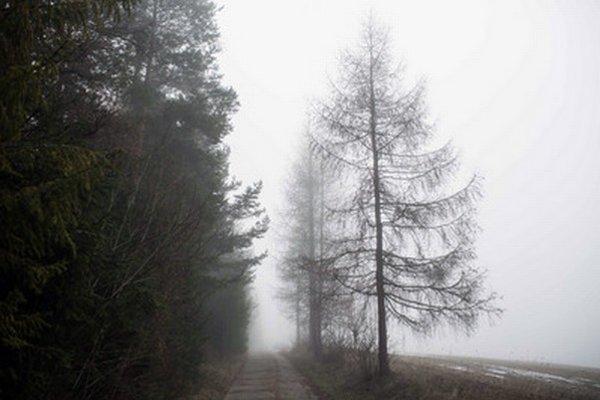 Hmla v podtatranskej obci Spišské Bystré pri Poprade.
