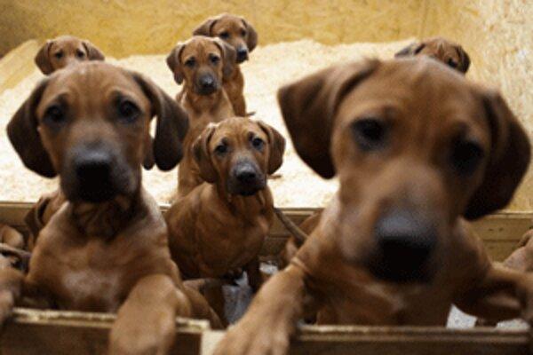 Za psy sa v Prievidzi platí 37 alebo 12 eur.