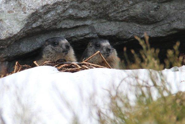 Začína platiť od 1. novembra. Turisti môžu včase jej trvania navštíviť Tatry po vysokohorské chaty. Dôvodom uzávery je ochrana vzácneho živočíšstva arastlinstva.