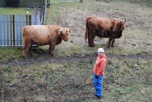 Chovateľ R. Košťál. Pri svojom dobytku.