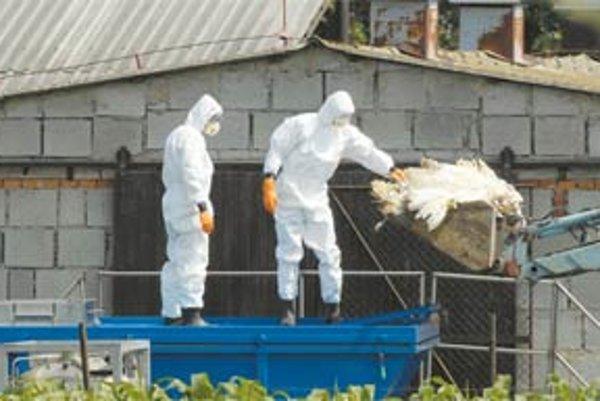 Likvidácia chovu moriek postihnutého vírusom H5N1 v Tisovej v Česku