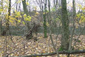 Pomedzi stromy vidno len časť betónového plotu a obrie mravenisko. V skutočnosti je to jeden z bunkrov.
