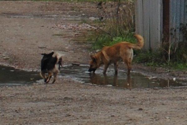 Túlavé psy. Sú najmä vmiestach, kde žijú neprispôsobiví občania.