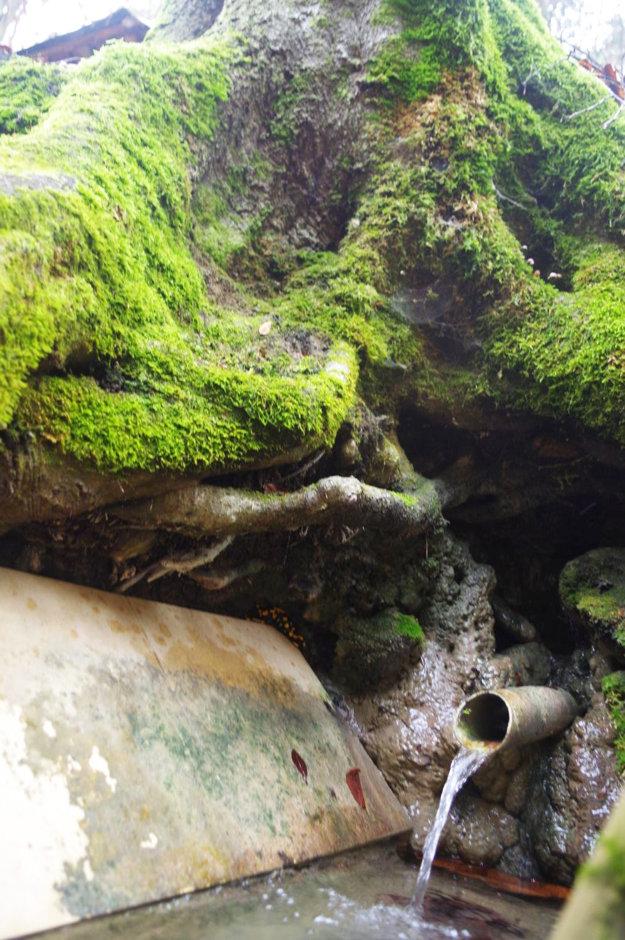 Zimný úkryt salamandier, malá dračia jaskyňa.