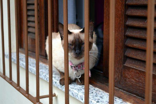 Mačky milujú teplo, človek, keď je ho v interiéri príliš veľa, už menej.
