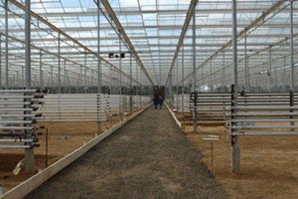 Obrovský skleník sa rozprestiera na ploche 1,5 hektára.