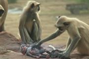 Nový dokument ukazuje, ako sa zvieratá podobajú na ľudí.