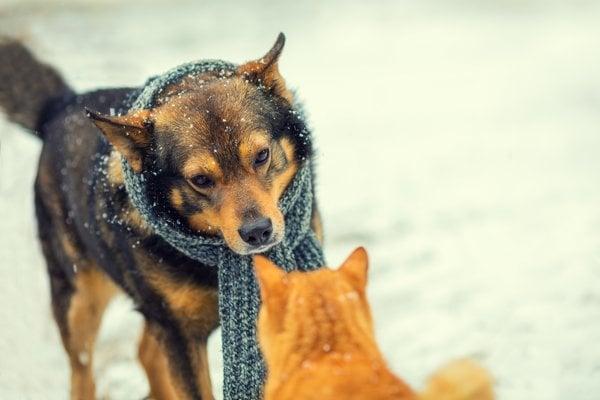 Mačky sa v inteligencii môžu psom vyrovnať.