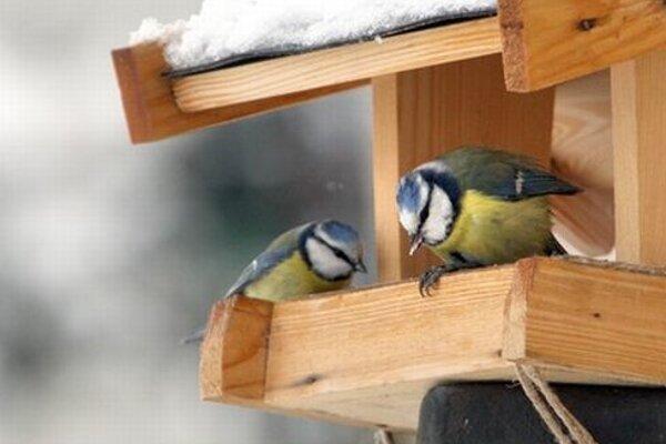 Na deti čaká aj expedícia do vtáčieho raja.